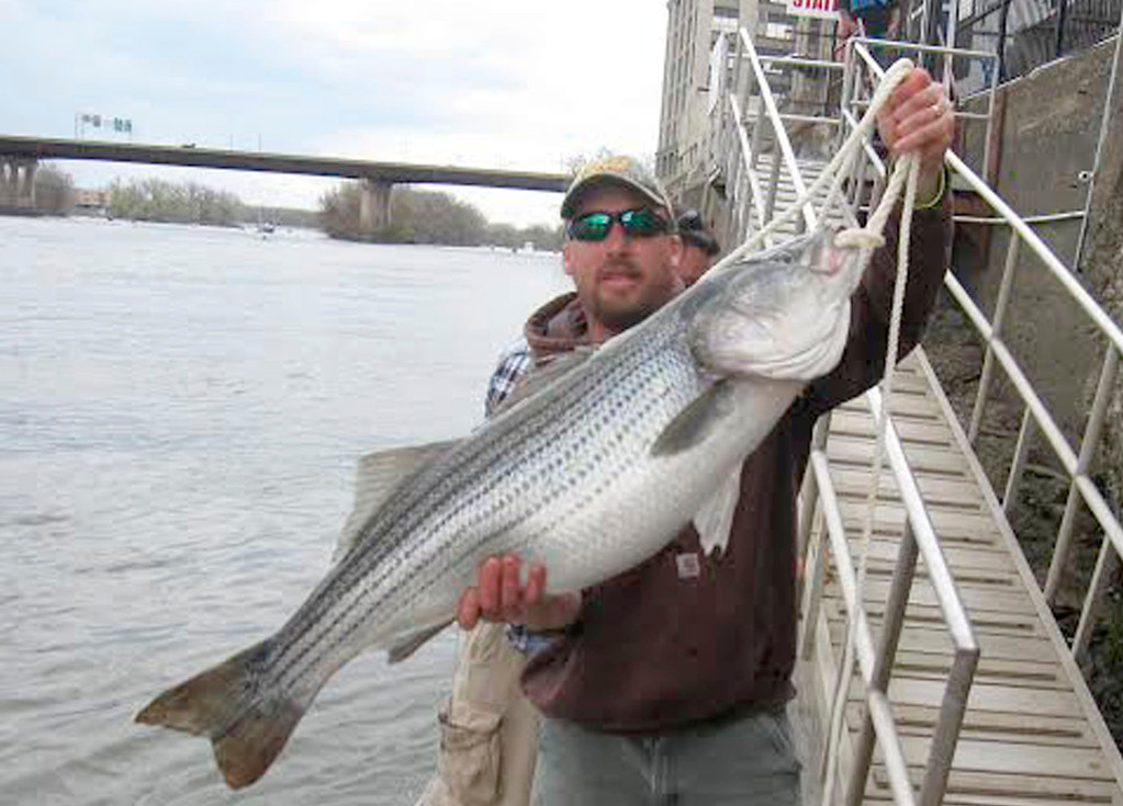 """. 1st Place winner of Ale House Troy Striped Bass tournament with a catch of 32.10 lbs, 41\"""" from  Bill Peaslee of West Sand Lake, NY"""